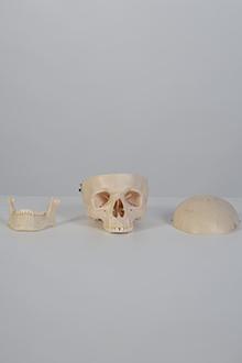 Skull model #3